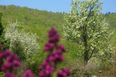 Baumblüte2