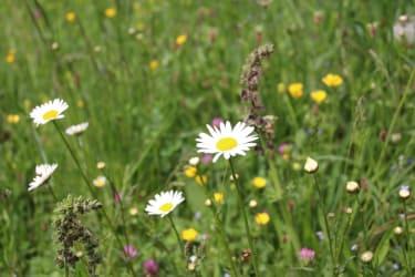 Karhof - Entdecken Sie bei einem Spaziergang die Schätze der Natur, zB wunderbare Blumenwiesen
