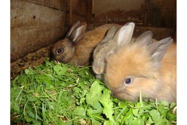 Karhof - Wir haben viele Streicheltiere, wie zB Hasen