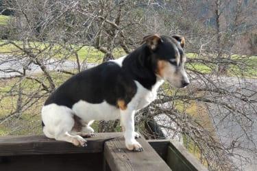 unser Hund Duke
