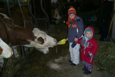 Die Kinder füttern die Kühe