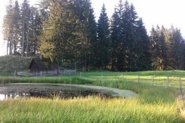 Ferienhaus Zwickelreith - Landschaftsidylle - Naturbiotop