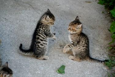 Ferienhaus Zwickelreith  - unsere Katzen