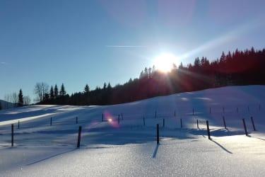 Winter 2017 - Naturbiotop