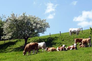 Besonders schön ist unsere Region zur Zeit der Baumblüte.