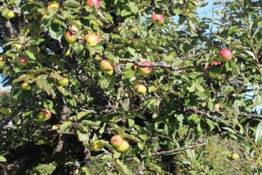 Hirmhof - Äpfel für Säfte und Most