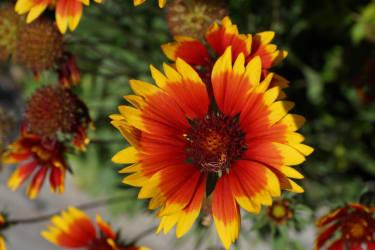 Familie Bauer - Blumen