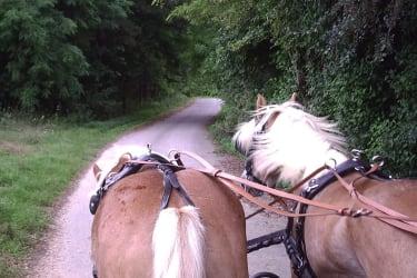 Ausfahrt mit der Kutsche