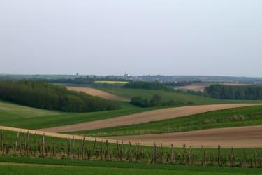 Frühlingslandschaft mit Weingarten