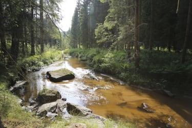 Erlebnishaus Rienesl - Fluss Zwettl