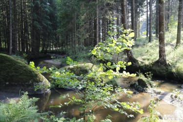 Erlebnishaus Rienesl - Waldluft genießen