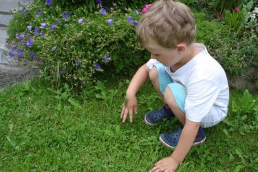 Entdeckung im Garten