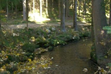 malerische Waldwege zu Ihrer Erholung beginnen bei unserem Haus
