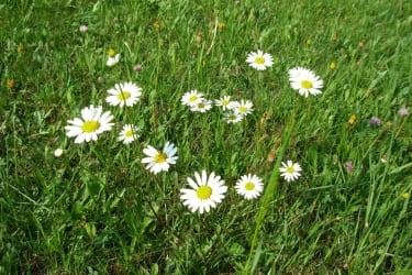 Blumenwiesen um unser Haus
