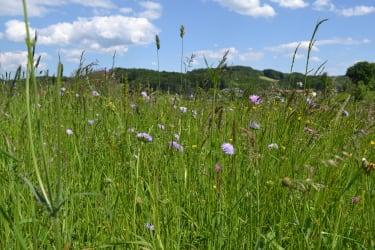 Unsere Blumenwiesen