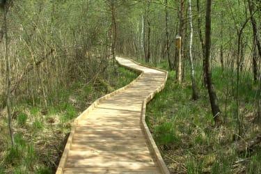 Moorlehrpfad am Holzöstersee