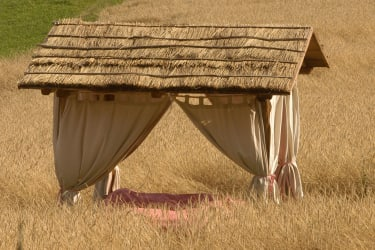 Das Kräuterbett im Kornfeld ...