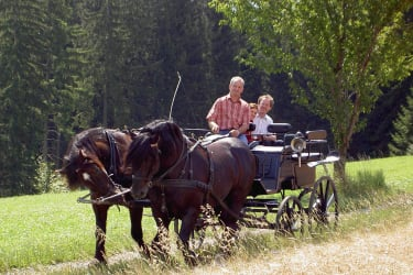 Horse and carriage tour