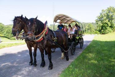 Kutschenfahren mit Pferdeflüsterer Franz
