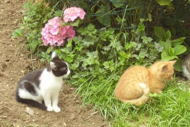 Katzen Garfield und Felix