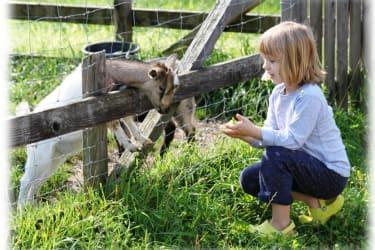 Ziegen füttern