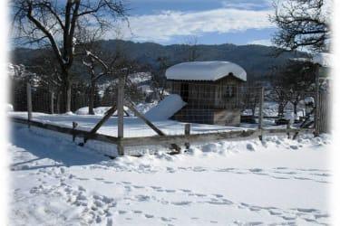 Winter Ziegenauslauf