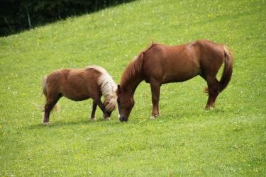 Syrano und Julie