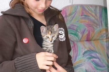 Babykatzen - Verwöhnprogramm