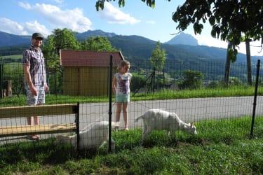 Spaziergang mit den Ziegen