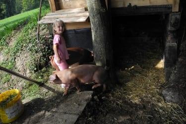 Unsere Freilandschweine Schoko und Cream