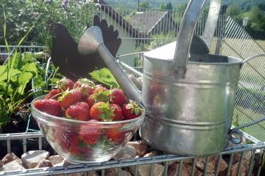Frisch vom Garten auf den Frühstückstisch!