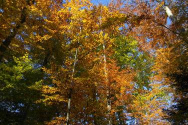 Prachtvoller bunter Herbst