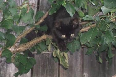 Katze Blacky