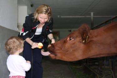 Kuh Annerl freut sich immer auf leckere Sachen