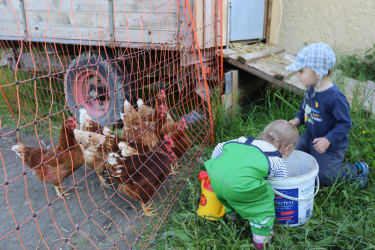Die Kinder bei den Hühnern