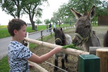 Esel am Nachbarhof