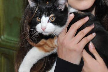 Katzenkind Cora