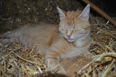 Unsere Katze Donna