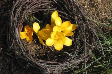 Frühlingsblume1