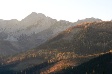 schöne Herbstwälder