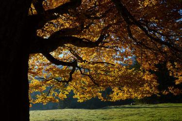 wunderbarer Herbst