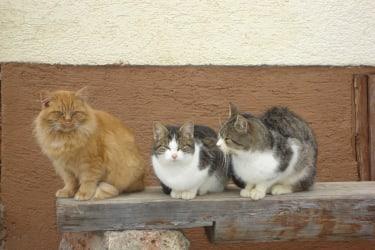 Unsere Katzenschar