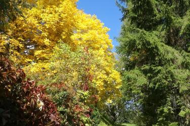 golderer Herbst