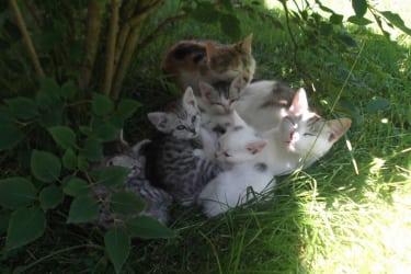 Katzenfamilie genießt die Sonne