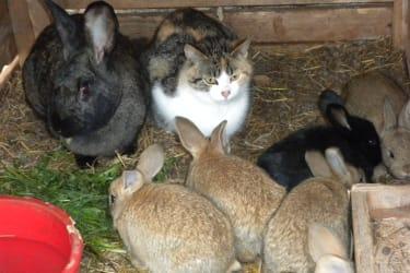 Katzen - Hasenmama