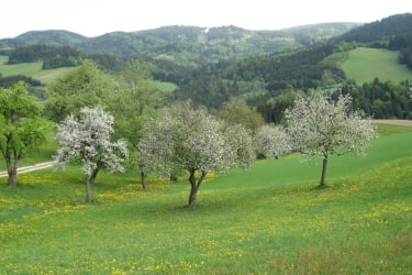 Frühling am Hof