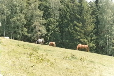 Unsere Pferde.