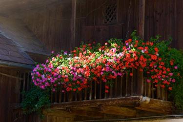 Blumenpracht im Innenhof