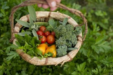 Ernte aus dem Gemüsegarten