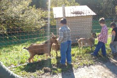 Die Ziegen haben immer Hunger!